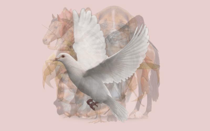 A Dove