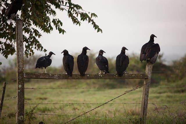 Birds (Pexels)