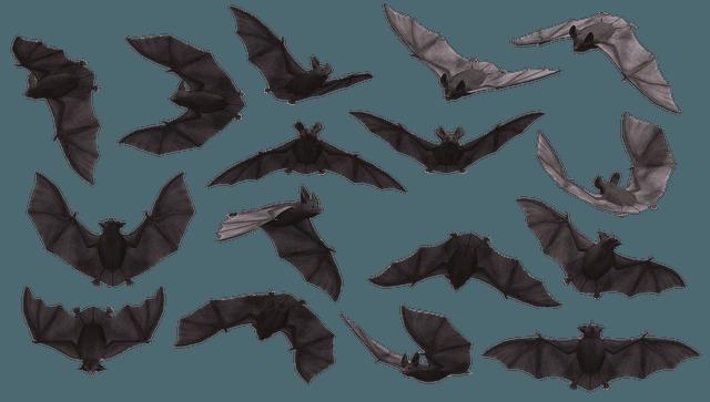 Bats (Pixabay)