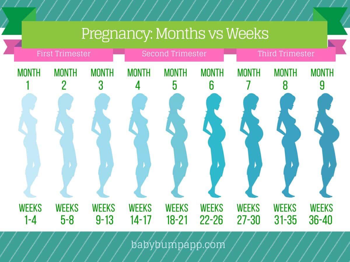 Pregnancy Trimester Chart Heartpulsar